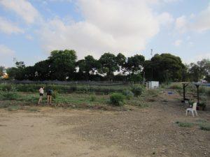 7-2-community-garden-shvuat-haadama